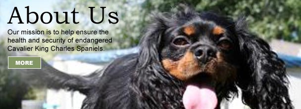 home-aboutus