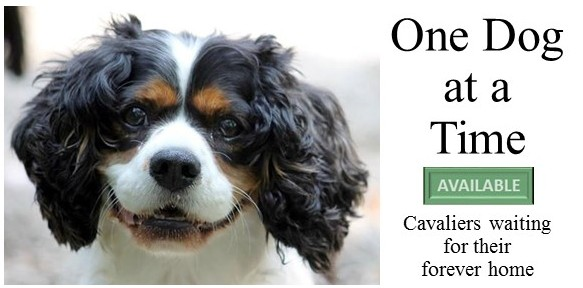 Welcome | Greater Chicago Cavalier Rescue
